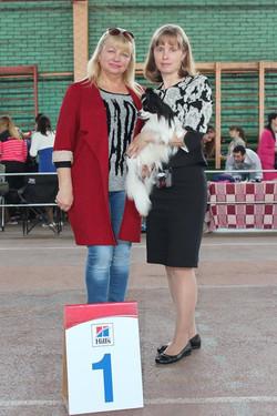 купить щенка папильона в москве