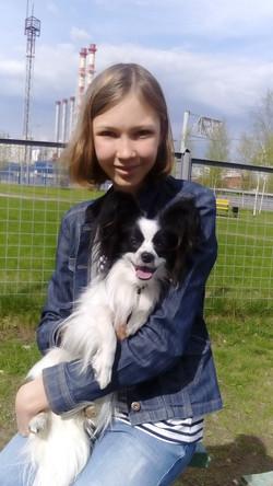 папильон собака купить в москве