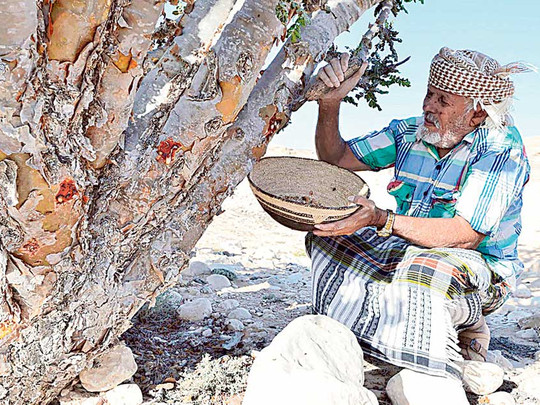Land of the Frankincense