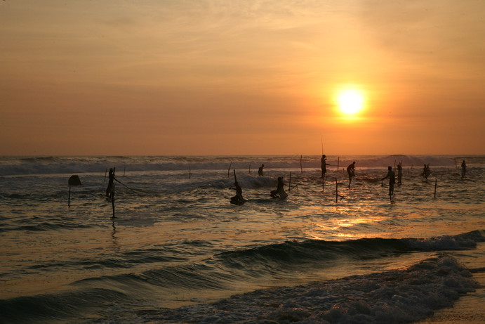 Koggala - stilted fishermen