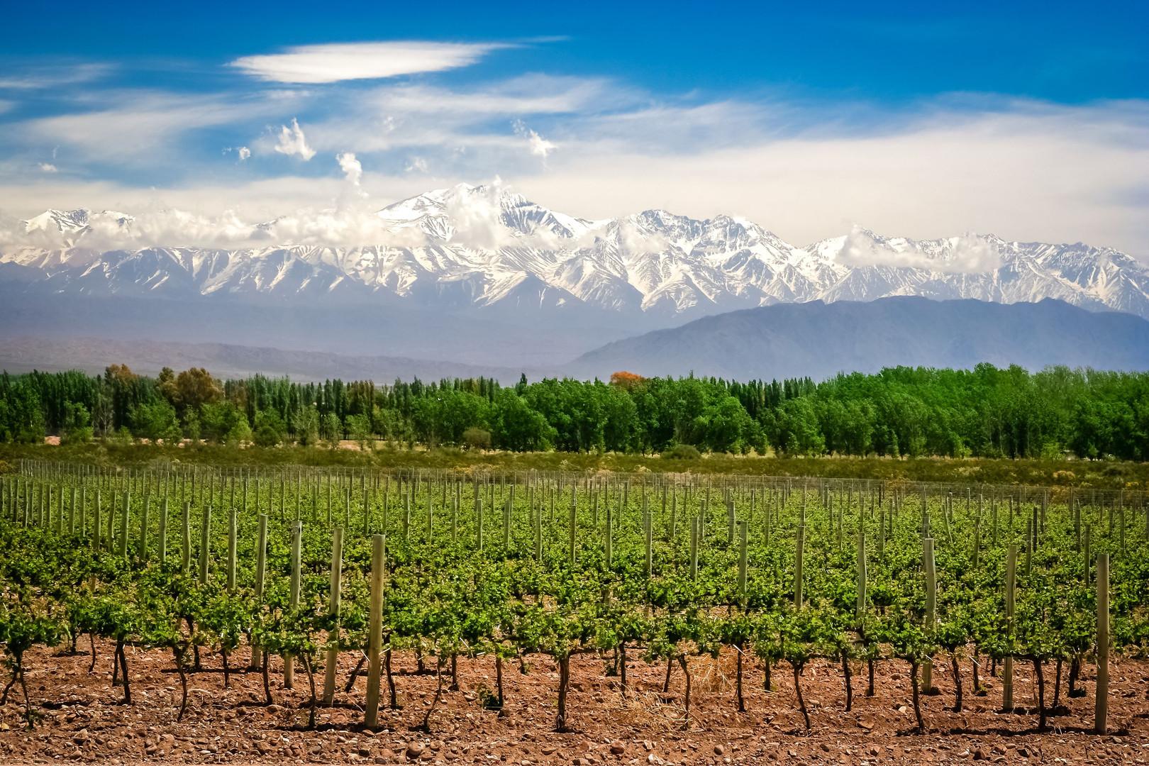 Mendoza Winelands