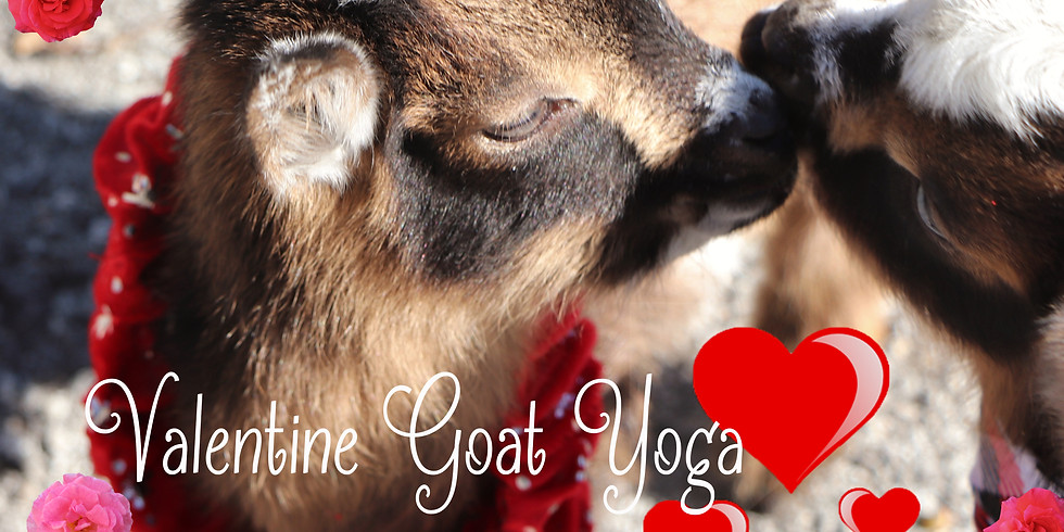 GOAT TO LOVE IT