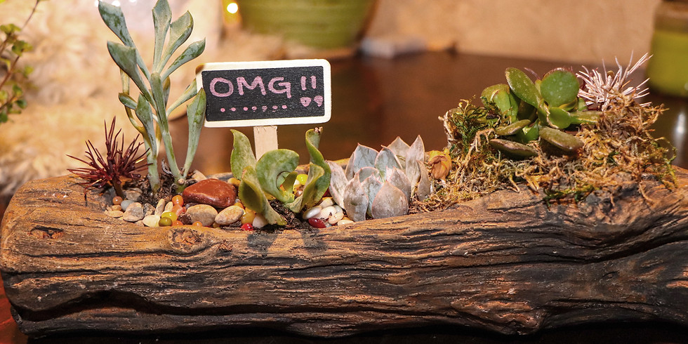 Morning Goat Yoga & Make Your Own Succulent II