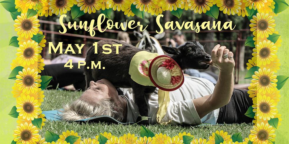 Sunflower Savasana