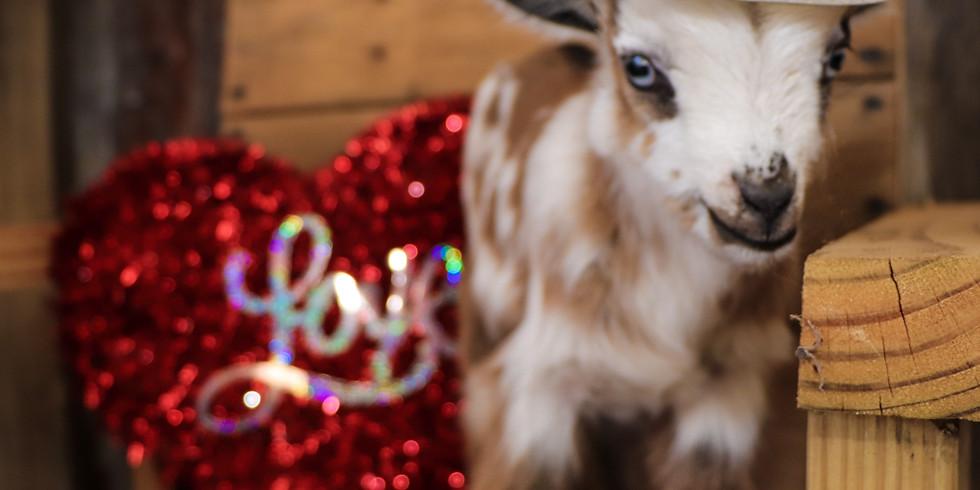 BE MY VALENTINE Goat Yoga