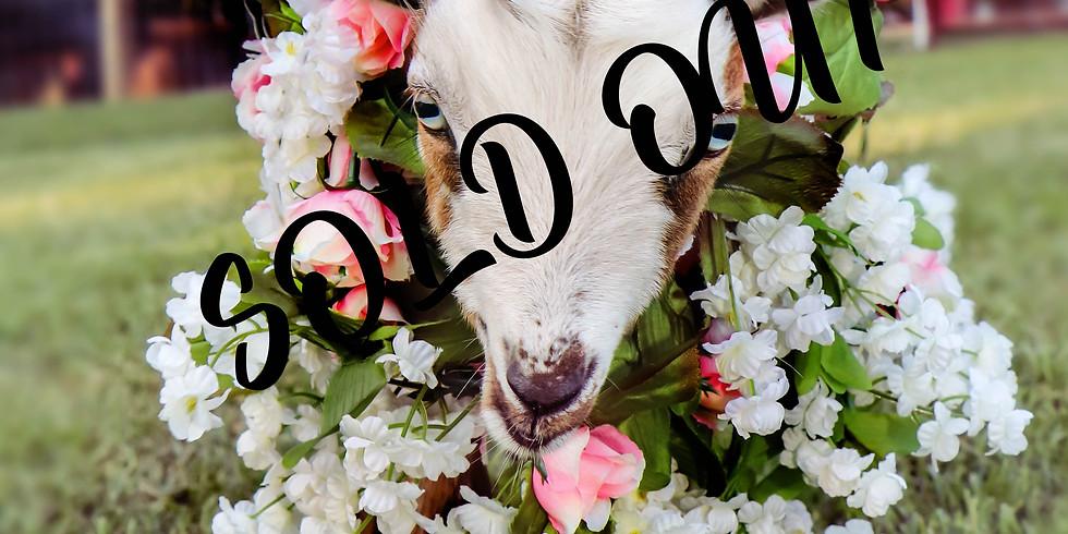 Flower Power Goat Yoga