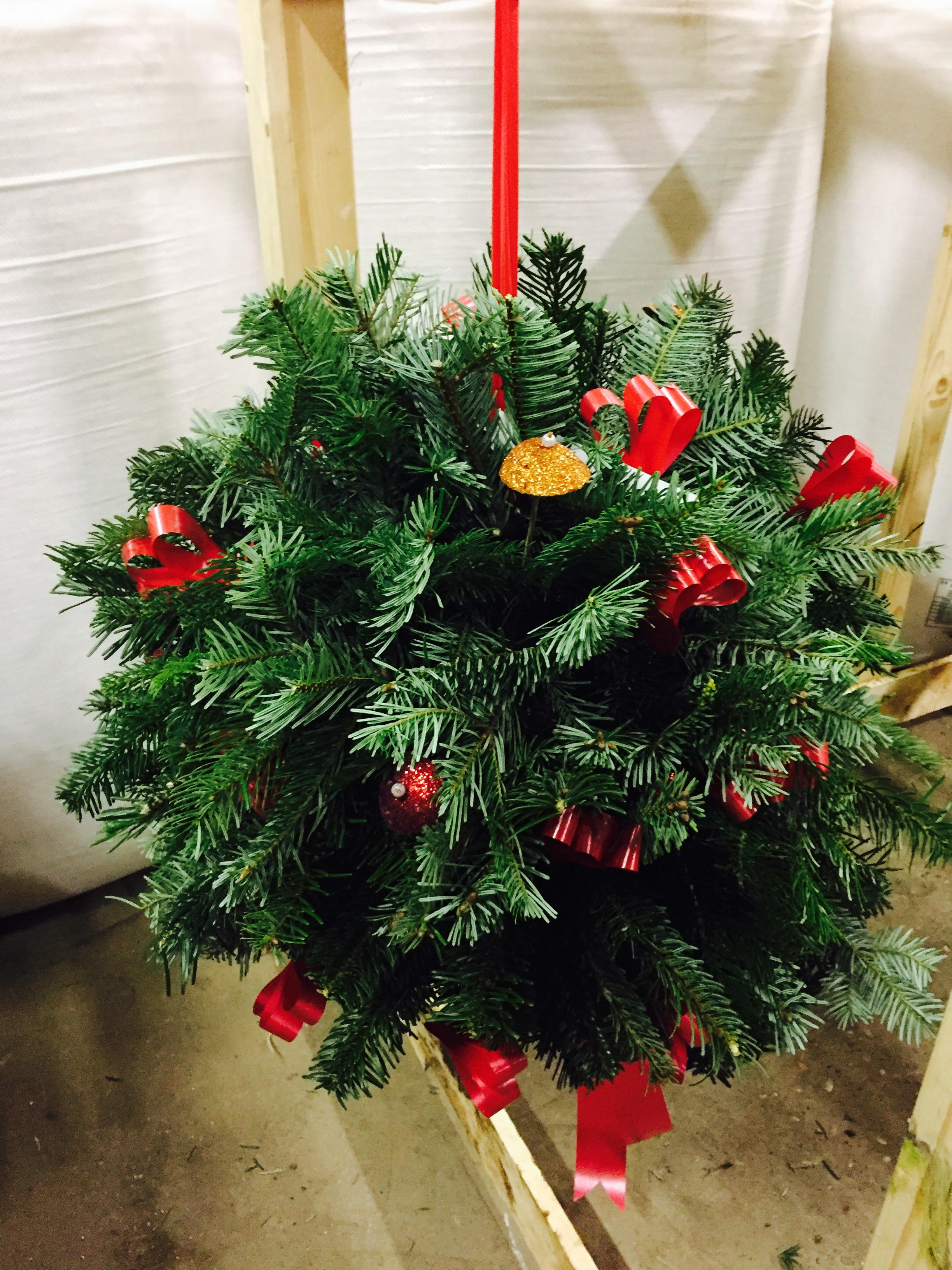 Hull Christmas Trees