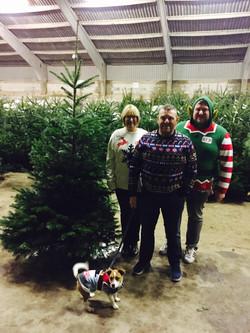 Hull Christmas Trees 2016