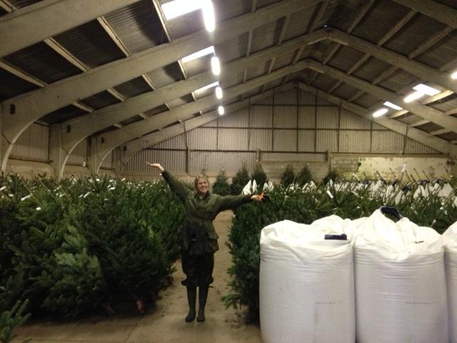 Christmas Trees Hull - Warm Welcom