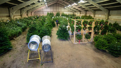Hull Christmas Trees full with trees