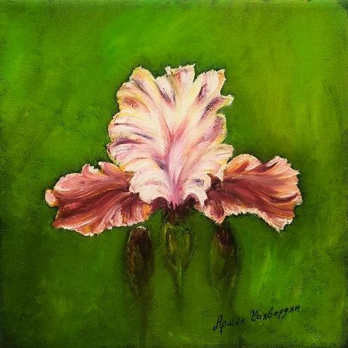 """Картина """"Ирис"""", 20 х 20 см, холст, масло"""