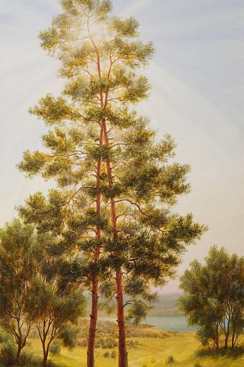 """Картина """"Сосны"""", 100 х 45 см., холст, масло"""