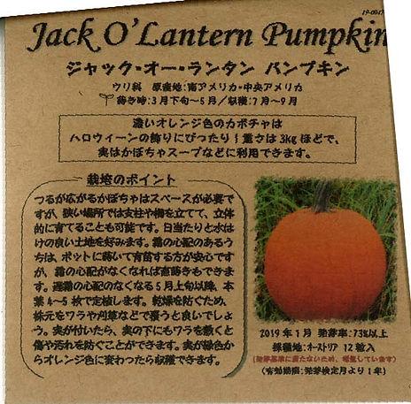 0047_ジャックオーランタン パンプキン_たねの森-01.jpg