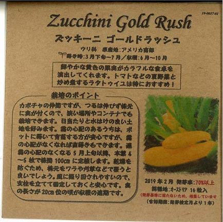 0037_ズッキーニ ゴールドラッシュ_たねの森-01.jpg