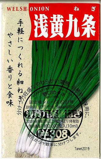 0221_浅黄九条細葱-01.jpg