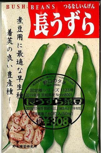 1123_長うずら菜豆-01.jpg