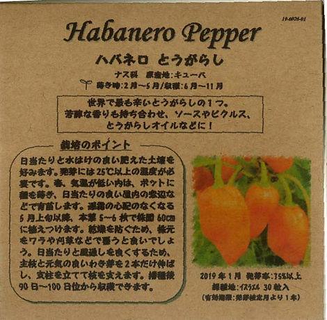 0026_ハバネロ とうがらし_たねの森-01.jpg