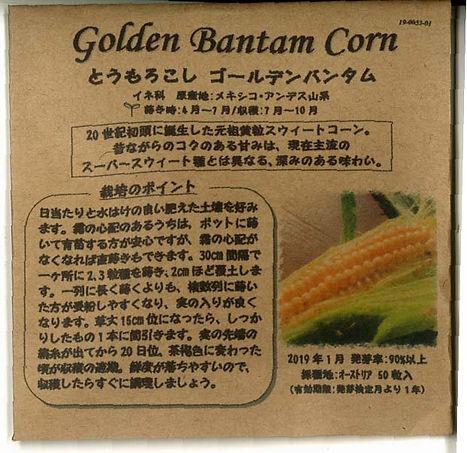 0053_トウモロコシ ゴールデンバンタム_たねの森-01.jpg