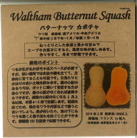 0045_バターナッツ カボチャ_たねの森-01.jpg