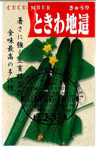 1197_ときわ地這胡瓜-01.jpg