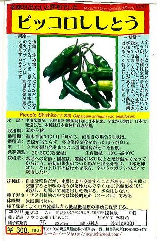 1029-ピッコロししとう-01.jpg