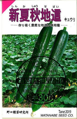 1423-新夏秋地這胡瓜-01.jpg
