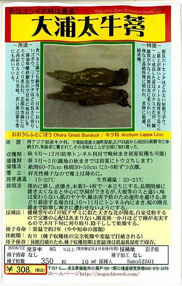 1037_大浦太牛蒡-01.jpg