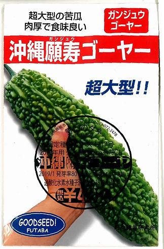 1217_沖縄願寿苦瓜-01.jpg