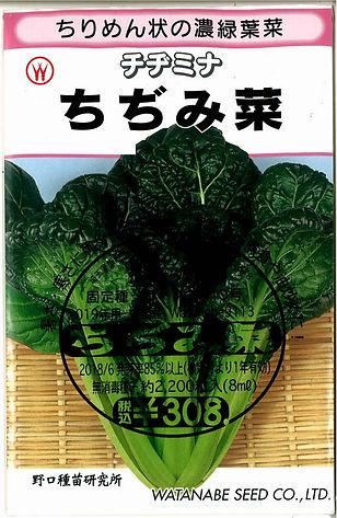 0119_ちじみ菜-01.jpg