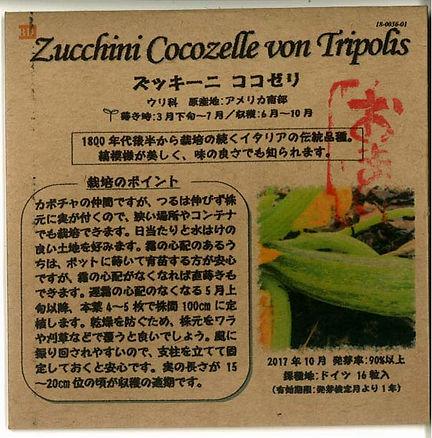 0036_ズッキーニ ココゼリ(おまけ)_たねの森-01.jpg