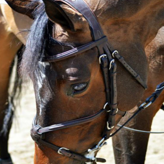Horse 8.png