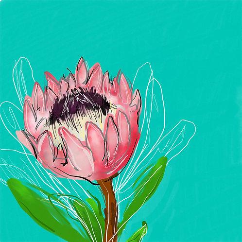 Protea teal