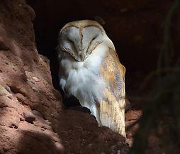 Bird Surveys Staffordshire, Herefordshire, Derbyshire, Nottinghamshire