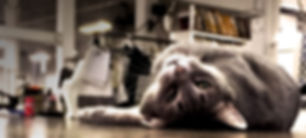 Studio-Cat_01.jpg