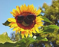 glasses-3477664_960_720.jpg