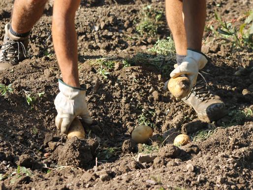 A Rovegno l'agricoltura che protegge il territorio: l'Azienda Agricola di Michele Ravera