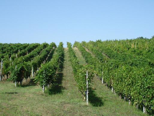 La Tosa: eccellenza e conoscenza per vini che parlano del territorio