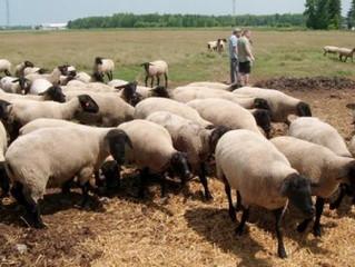 3 días para aprender de alimentación y manejo de ovejas y cabras