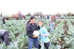 Salem Harvest