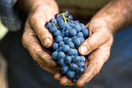 Pierre Favre Vins