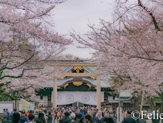 東京の桜散策した話