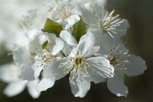 Bachs blomster medicin - test og flaske med holistiske dråber