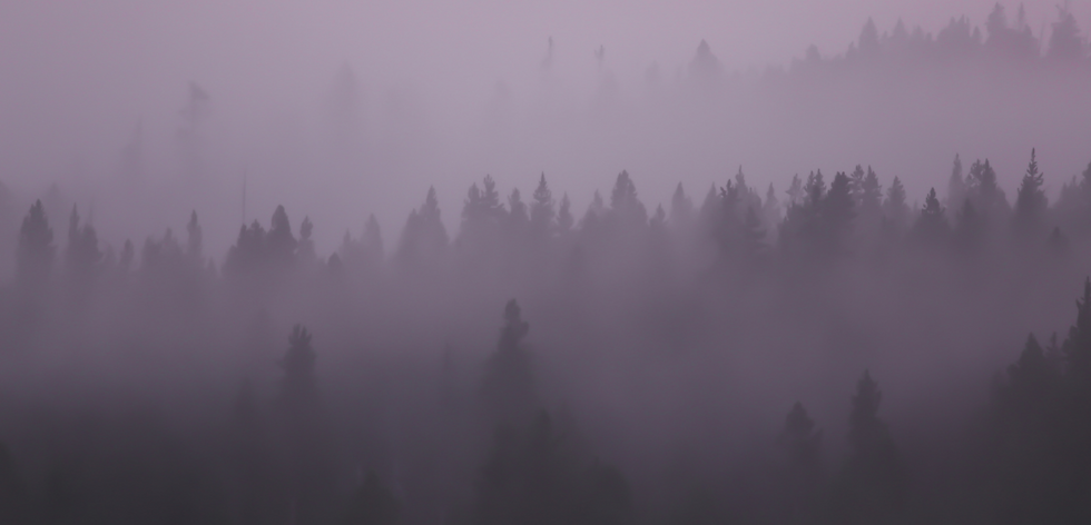 Purple Forest Background.png