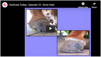 RFDTV Episode #10 - Growing Heel