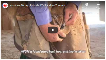 RFDTV Episode #17 - Barefoot Trimming