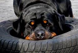 Rotti Reifenwechsel.jpg