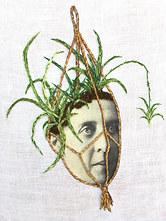 Spider Plant, 2018