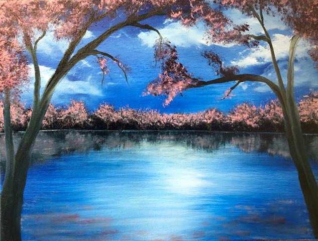 D.C. Cherry Blossoms