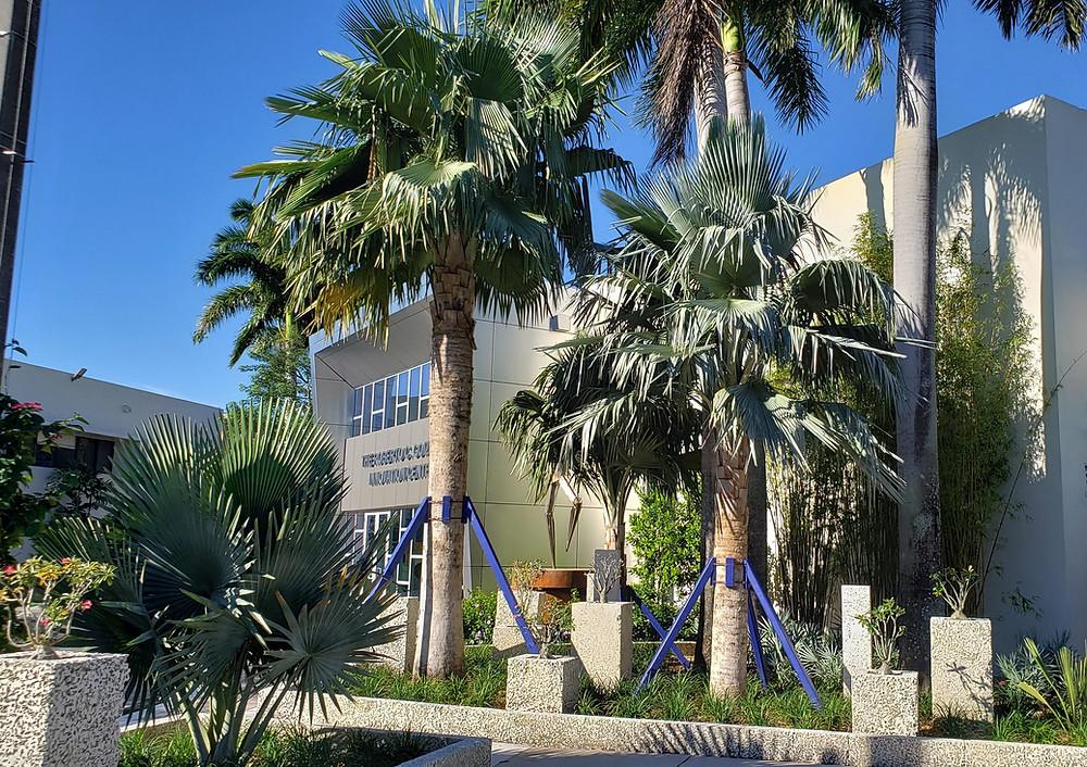 Bailey Palms frame the Goizueta Innovation Center by Zyscovich Architects at Belen Prepratory School