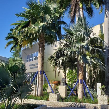 Arroyo Quad Series: Copernicia Palms Winner of 2020 Florida American Society of Landscape Architects